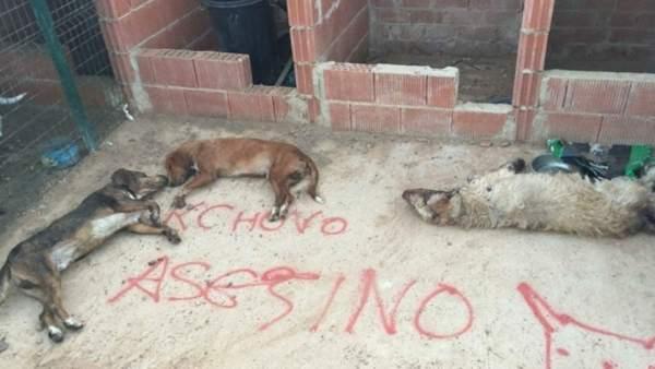 Perros muertos como venganza