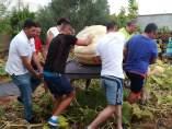 Calabaza gigante mollina málaga open concurso