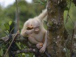 En peligro por ser albina