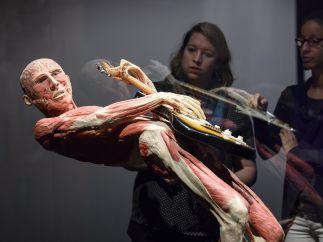 Los impactantes cadáveres humanos 'plastinados'