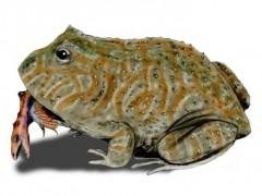 Afirman que una especie extinta de rana gigante podía comer pequeños dinosaurios