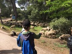 Imagen de unos escolares visitando GREFA