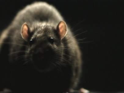 Serpientes y ratas invaden la 'Monsters Night' de Dmax