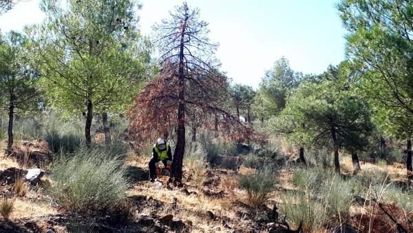 Trabajos en el Parque Natural Sierra de Baza