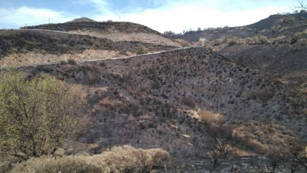 Terreno quemado en el incendio de Gran Canaria
