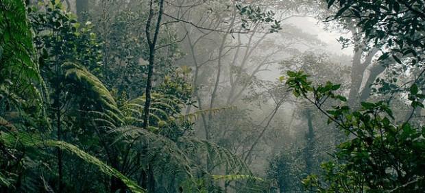 Bosque de Borneo, en Malasia