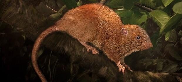 Vika, la nueva especie de rata gigante