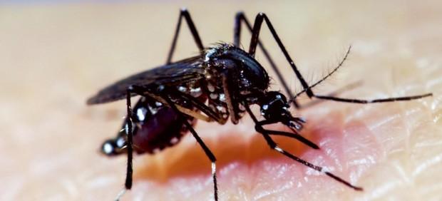¿Qué es el dengue y que síntomas tiene el virus que porta el mosquito tigre?
