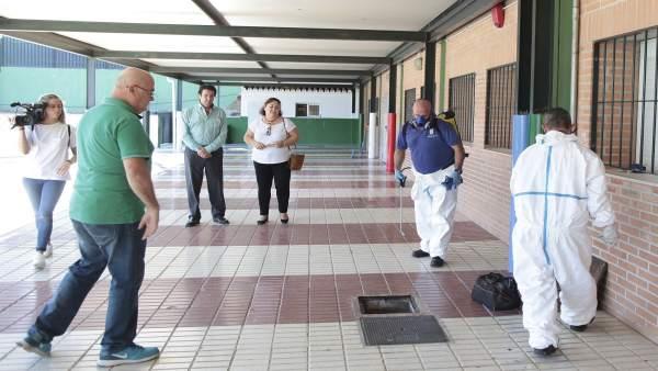 Desratización desinsectación desinfección centros escolares colegios marbella