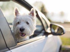 El abandono de mascotas en Semana Santa crecerá un 45%
