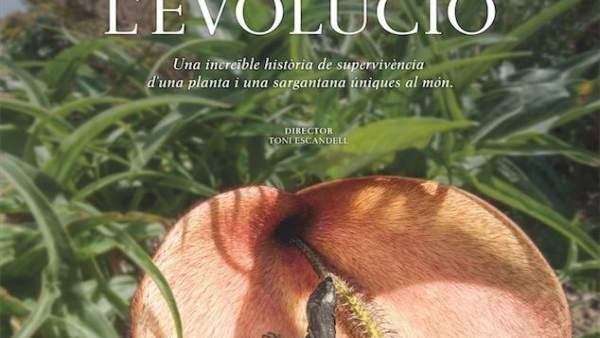 Naufrags de l'evolucio