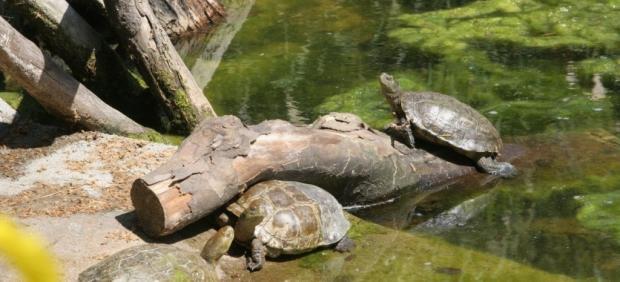 Una app se encargará de avisar este verano de las nidificaciones de tortugas en las playas españolas