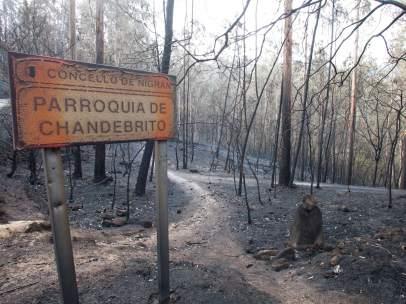Incendio Galicia