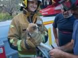 Rescate de un águila en Xàbia (Alicante)