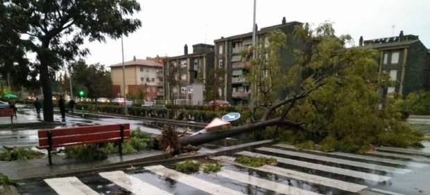 Lluvia en Catalunya, árbol caído, temporal