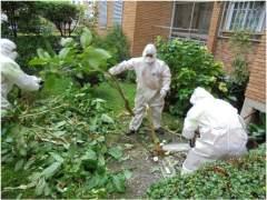 Retiran 66 plantas de burundanga en unos jardines de Madrid