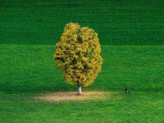 Verde otoñal en Suiza