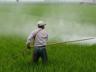 Pesticida