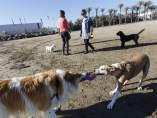 Playa de perros