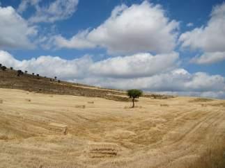 Campo De Cultivo, Cereal, Rural, Cosecha, Verano