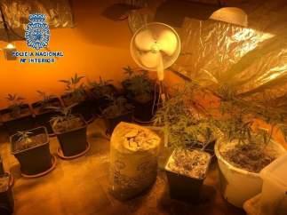 Rdo. 'La Policía Nacional Desmantela Una Plantación De Marihuana En Mérida'