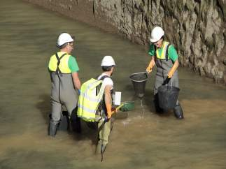 Rescate de peces en el canal de Gavet