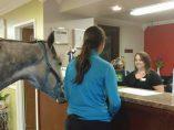 Un caballo en recepción