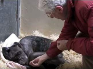 La emocionante despedida entre una vieja chimpancé y su fiel amigo y cuidador