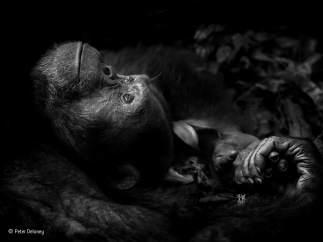 'Contemplación' de Peter Delaney