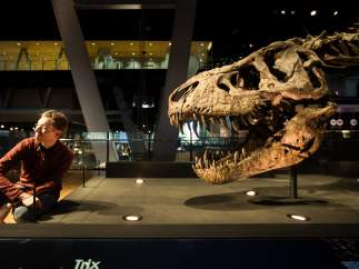 El paleontólogo Anne Schulp junto a Trix, el esqueleto de tiranosaurio mejor conservado del mundo