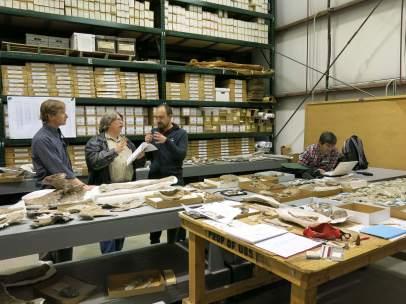 Trabajos en el laboratorio de identificación del nuevo dinosaurio