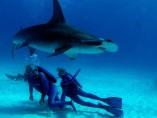 """Fotograma de la película """"Las maravillas del mar"""""""