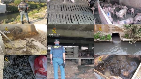 Guardia Civil investiga al propietario de una granja por abandono animal