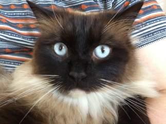 Gato asesinado en Reino Unido