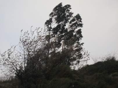 Las rachas de viento se hacen notar en muchas partes de Catalunya.