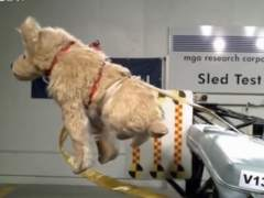 Crash test dog