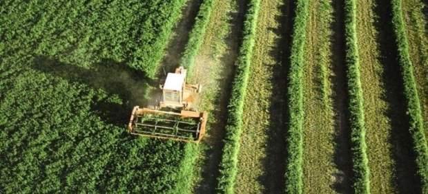 Cultivo del campo