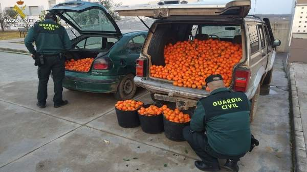 Remitiendo Np Opc Huelva 'La Guardia Civil Interviene 600 Kg. De Naranjas Y 200