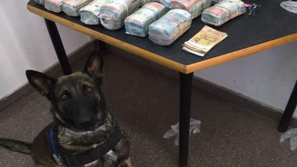 La unitat canina detecta en un autobús a Alacant una maleta amb 200.000€ i detenen l'amo per blanqueig