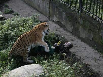 Ataque de un tigre en Rusia