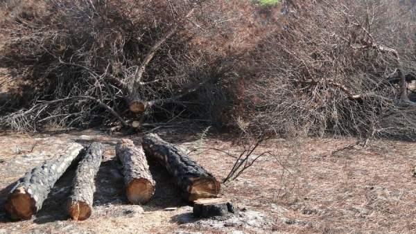 Detalle de los trabajos de tala de árboles en suelo urbano de Moguer.