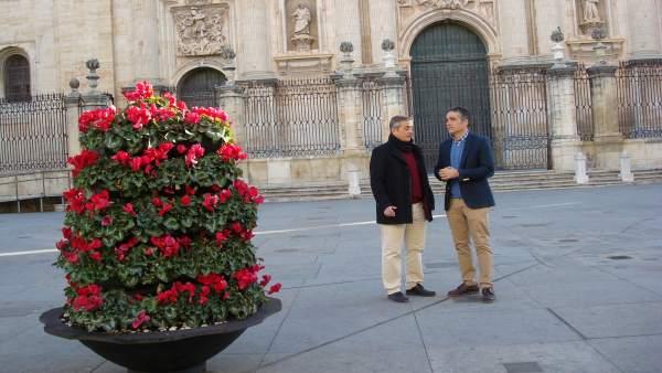 Plantación de flores y plantas de cara a la Navidad.