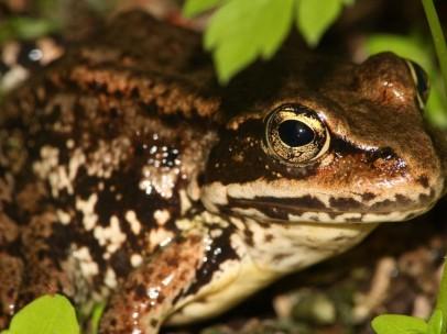 Imagen de archivo de una rana.