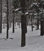 Nieve en el Pirineo oscense