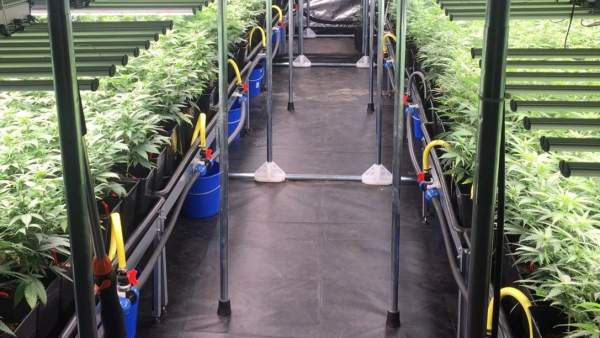Laboratorio de marihuana