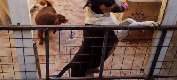 """Intervenen galls i gossos amuntegats i en un estat """"lamentable"""" en un corral del Cabanyal de València"""