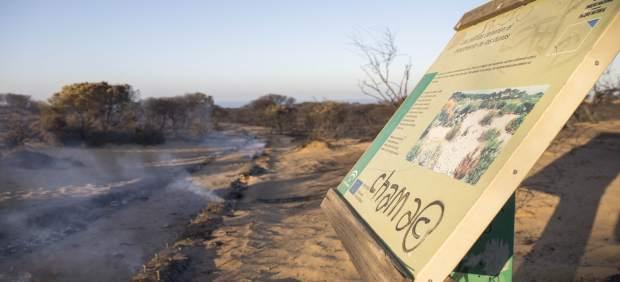 Incendio en el parque natural de Doñana (Huelva)