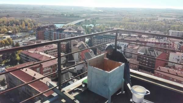 Nido de halcones en una azotea de Zamora