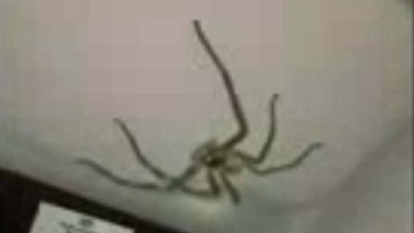Una conductora, aterrada por una enorme araña