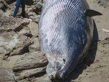 Cadáver de ballena